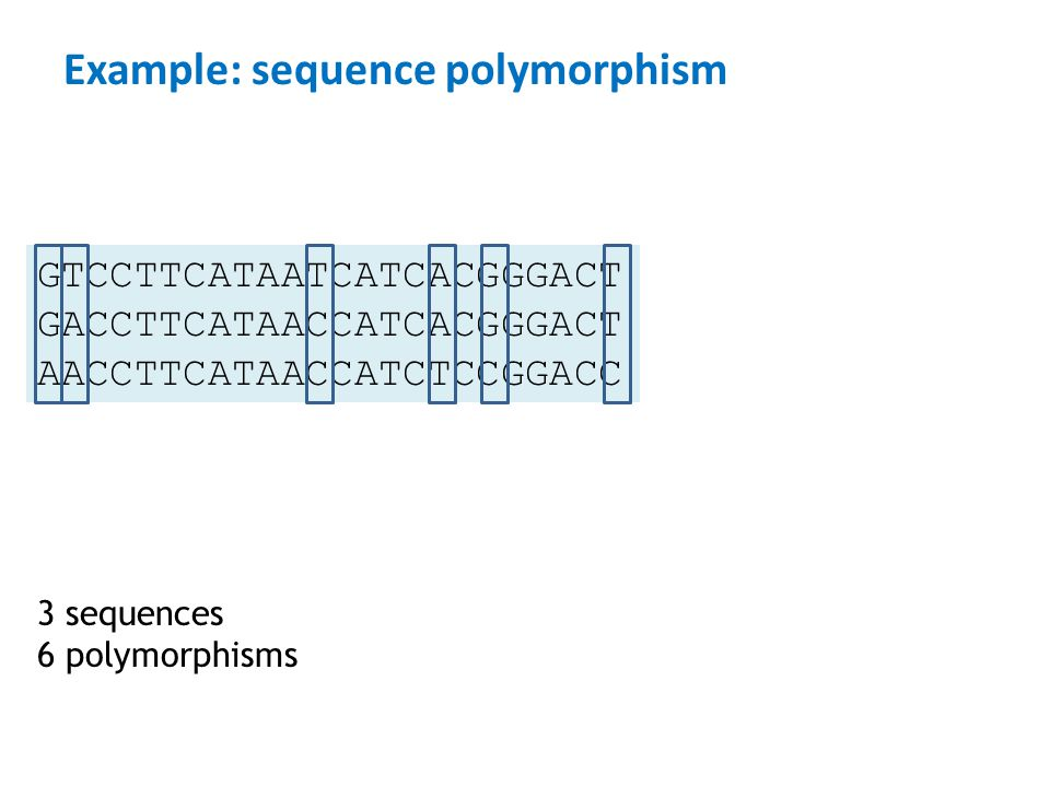 Example: sequence polymorphism
