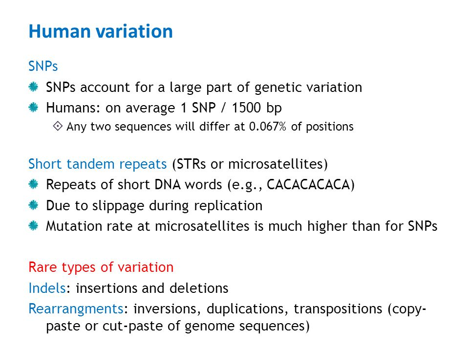 Human variation SNPs. SNPs account for a large part of genetic variation. Humans: on average 1 SNP / 1500 bp.