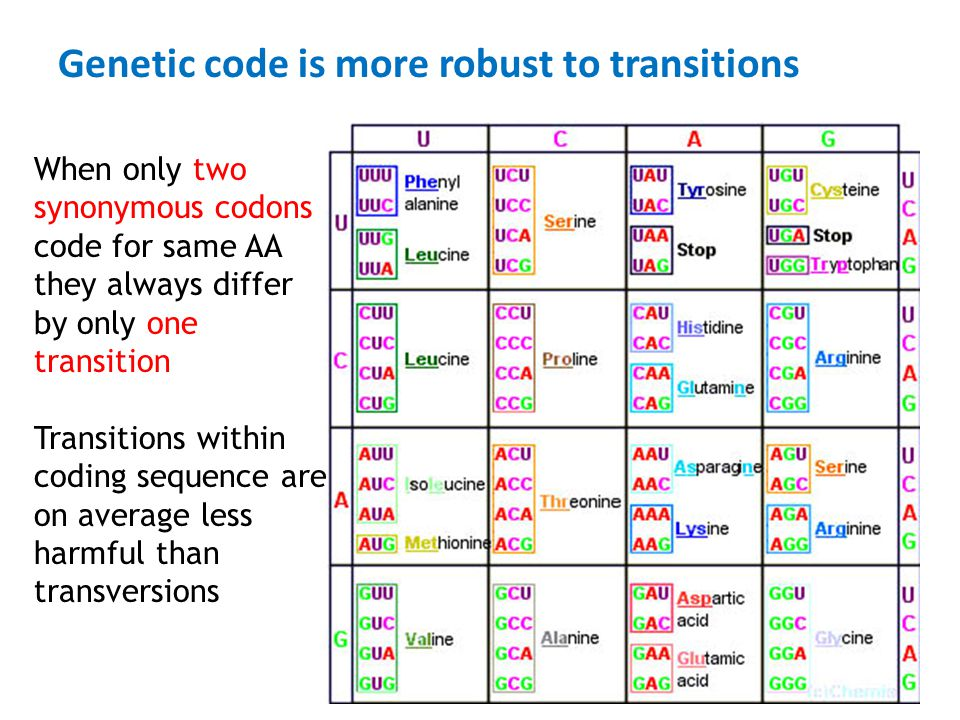 Genetic code is more robust to transitions