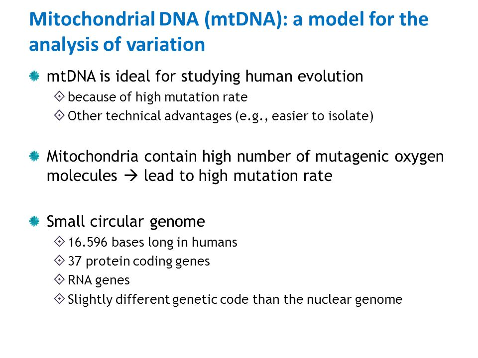 Mitochondrial DNA (mtDNA): a model for the analysis of variation