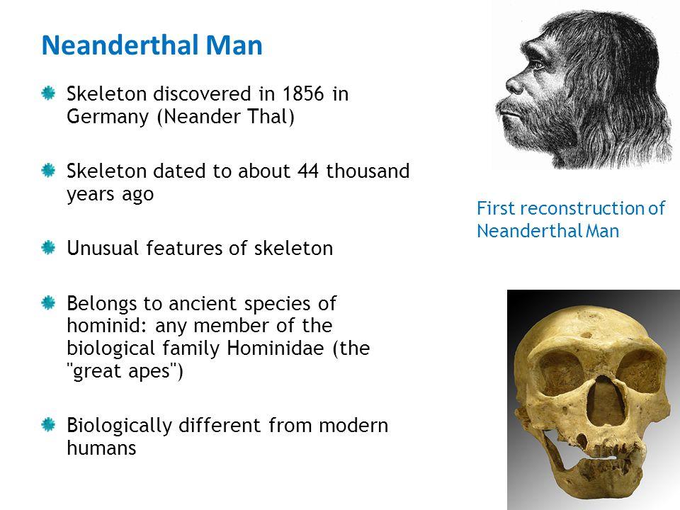 Neanderthal Man Skeleton discovered in 1856 in Germany (Neander Thal)