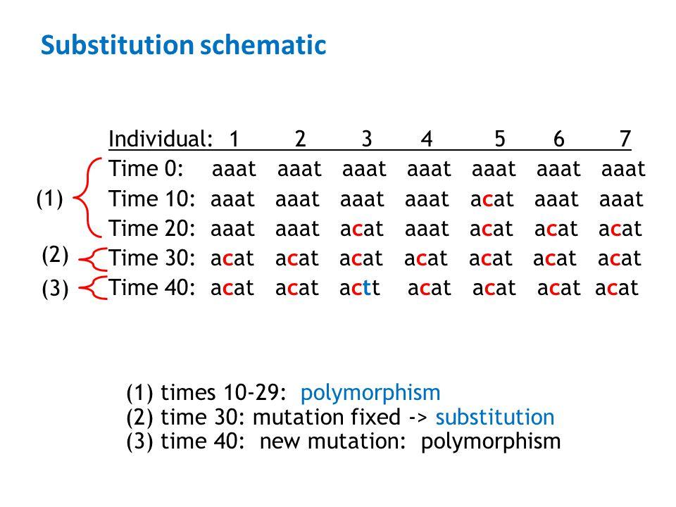 Substitution schematic