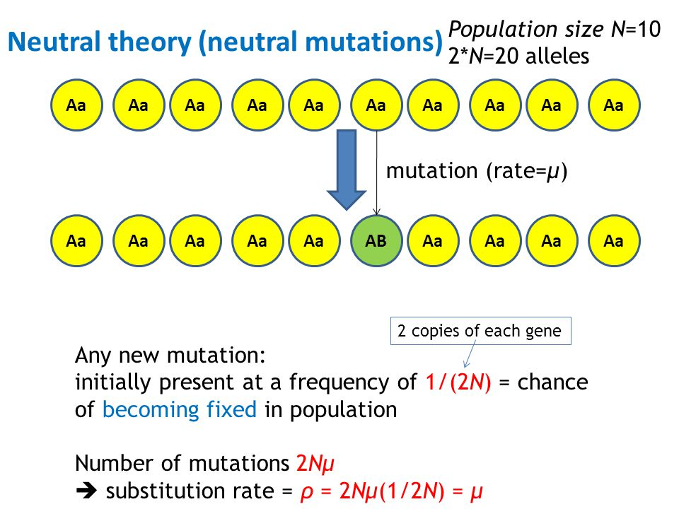 Neutral theory (neutral mutations)