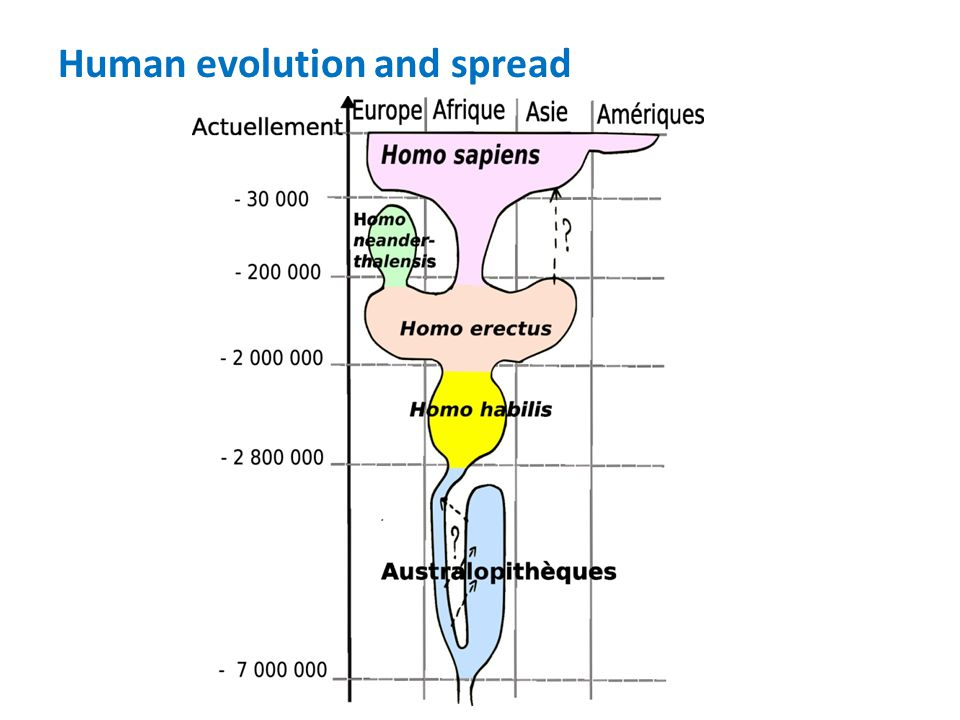 Human evolution and spread