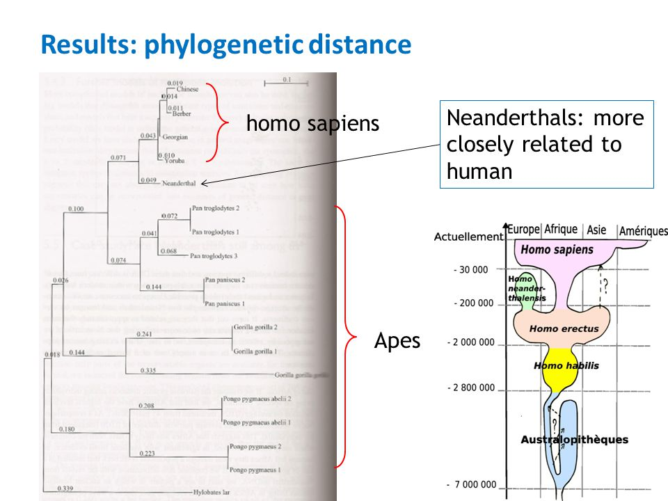 Results: phylogenetic distance