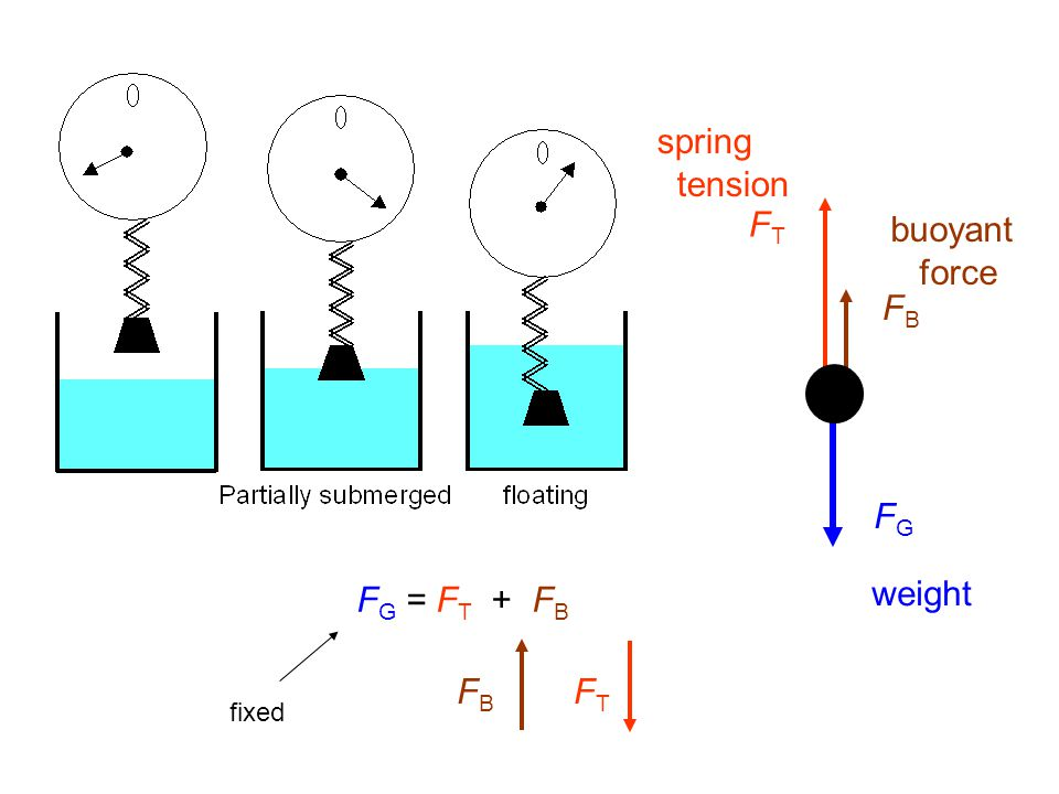 spring tension FT buoyant force FB FG FG = FT + FB weight FB FT fixed