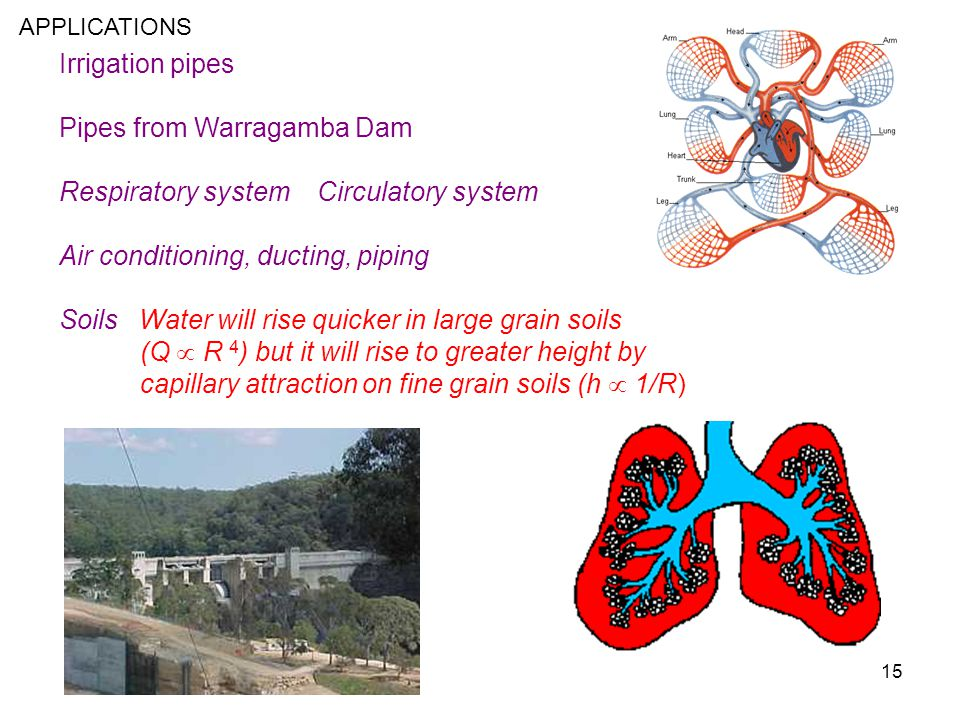 Pipes from Warragamba Dam Respiratory system Circulatory system
