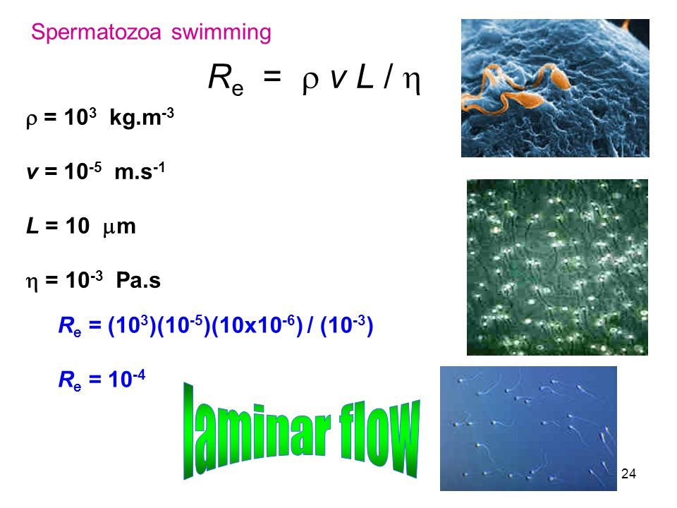 Re =  v L /  laminar flow Spermatozoa swimming r = 103 kg.m-3