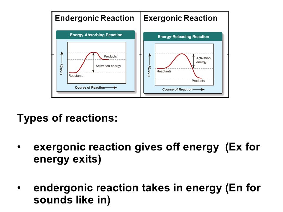 exergonic reaction gives off energy (Ex for energy exits)