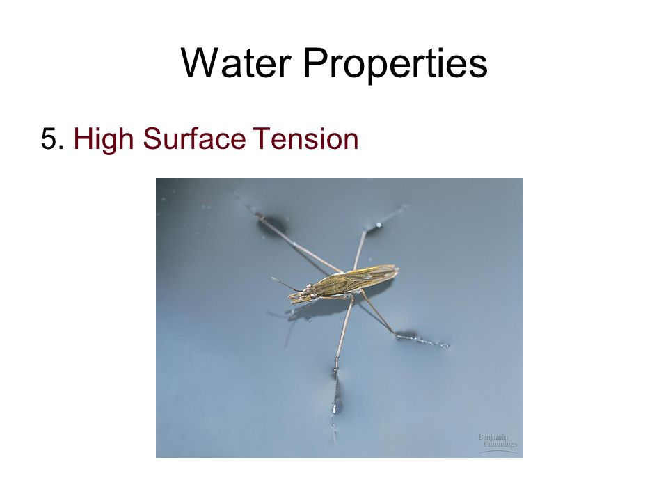 Water Properties 5. High Surface Tension