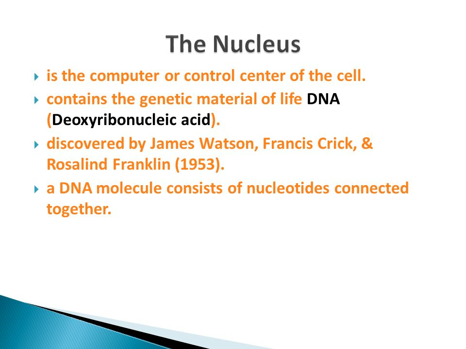 The Nucleus is the computer or control center of the cell.