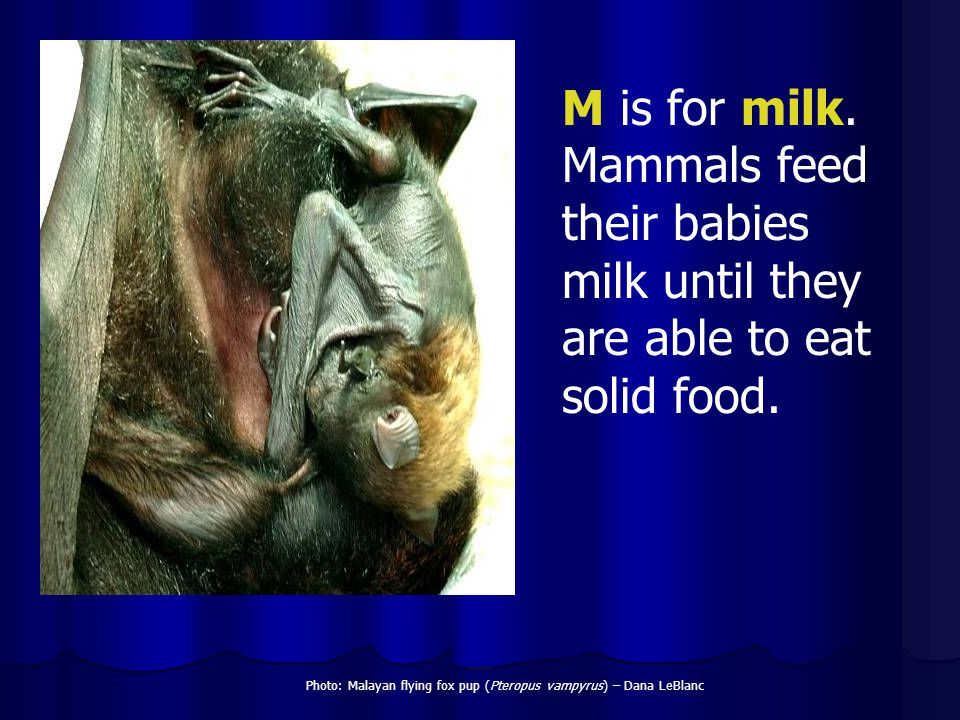 M is for milk. Mammals feed their babies milk until they are able to eat solid food.