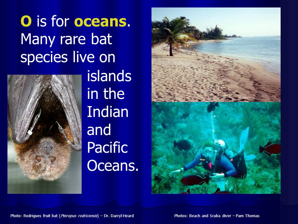 O is for oceans. Many rare bat species live on