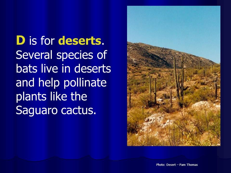 D is for deserts. Several species of bats live in deserts