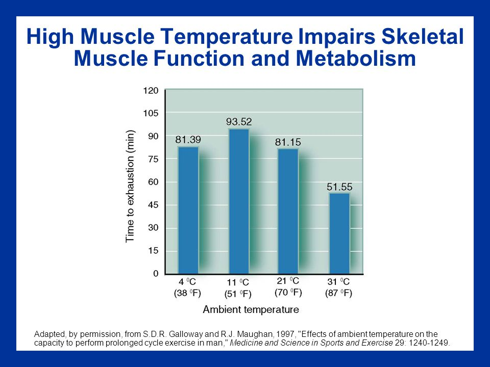 High Muscle Temperature Impairs Skeletal Muscle Function and Metabolism