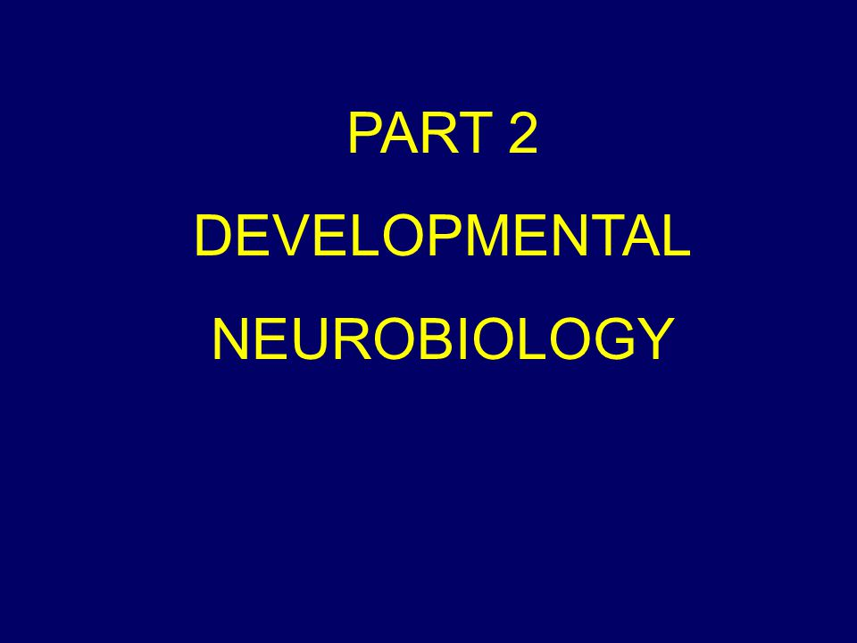 PART 2 DEVELOPMENTAL NEUROBIOLOGY