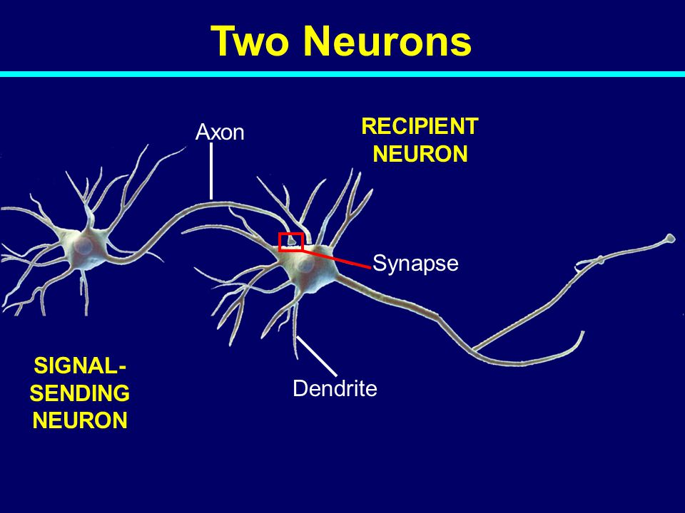 SIGNAL-SENDING NEURON