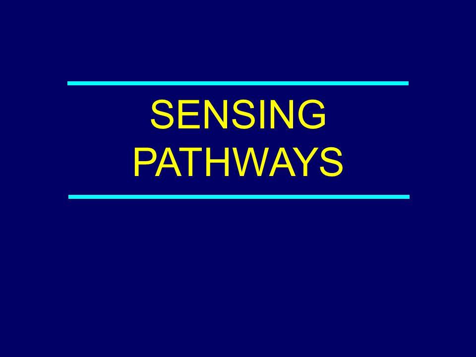 04-042 SENSING PATHWAYS