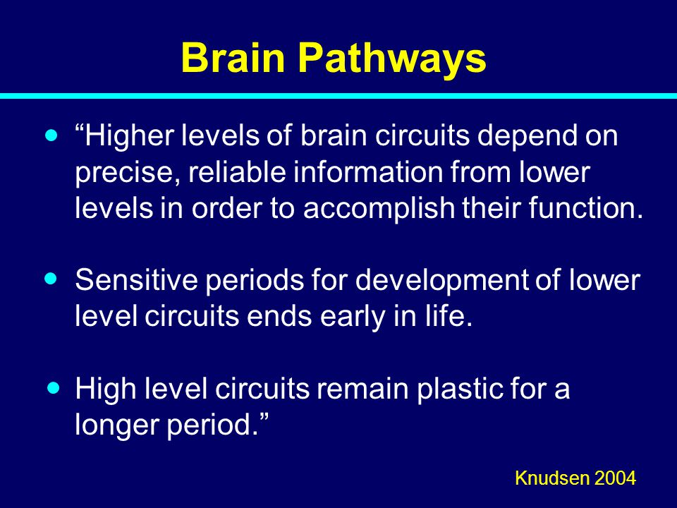07-123 Brain Pathways.