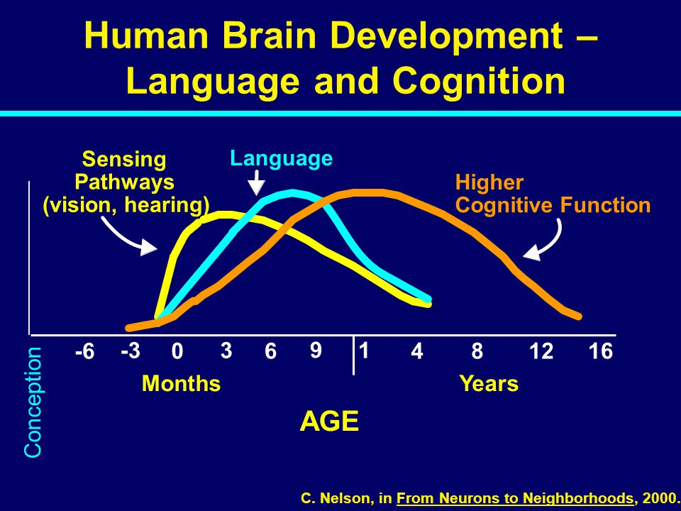 Human Brain Development – Language and Cognition