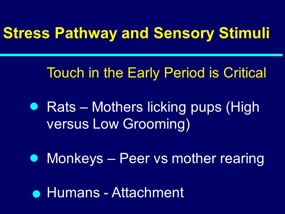 Stress Pathway and Sensory Stimuli
