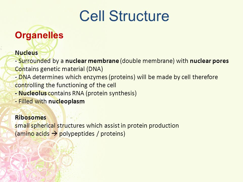 Cell Structure Organelles Nucleus