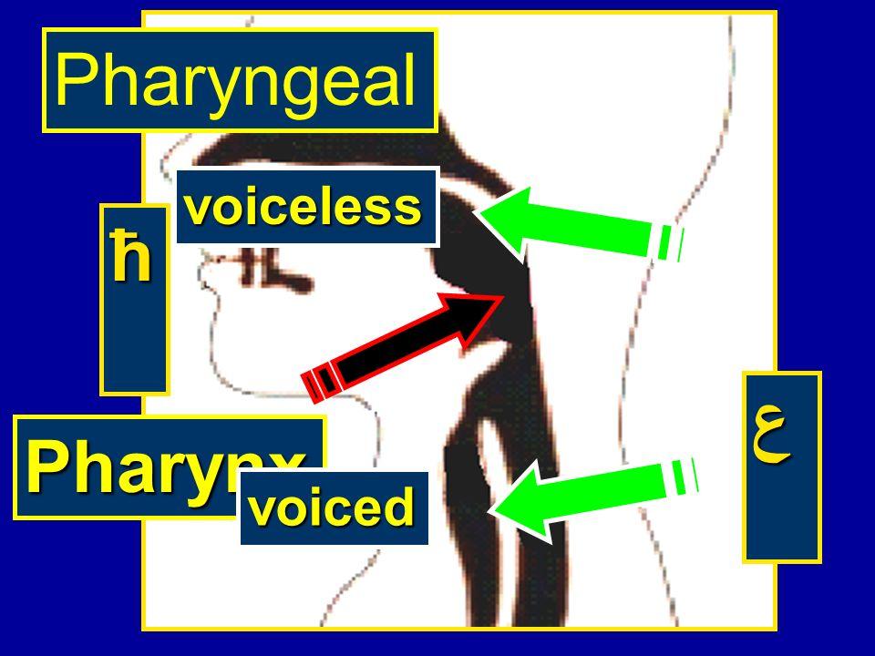 Pharyngeal voiceless ћ ع Pharynx voiced