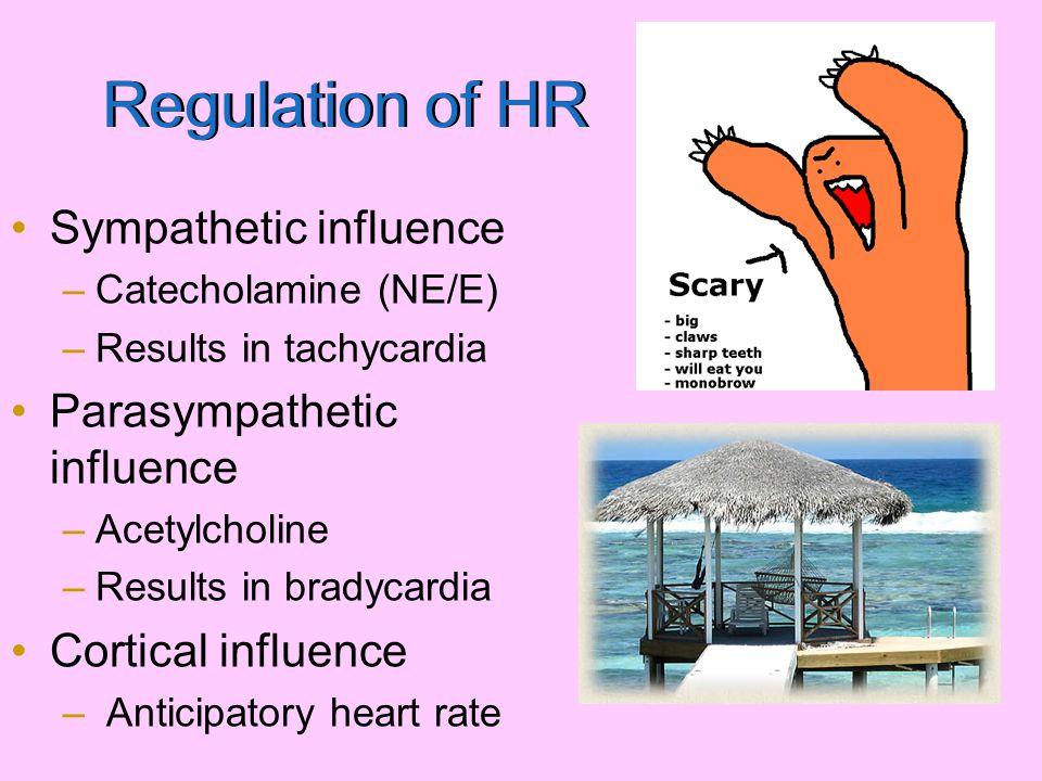 Regulation of HR Sympathetic influence Parasympathetic influence