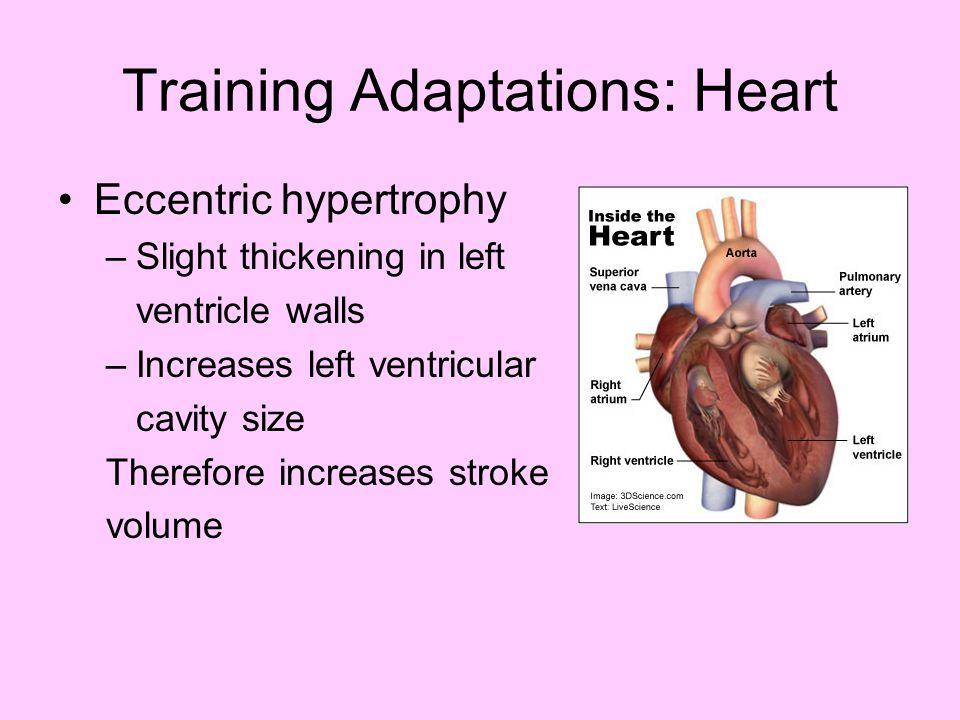 Training Adaptations: Heart