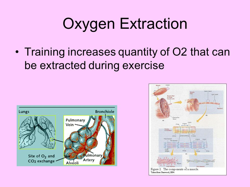 Oxygen Extraction Training increases quantity of O2 that can be extracted during exercise.