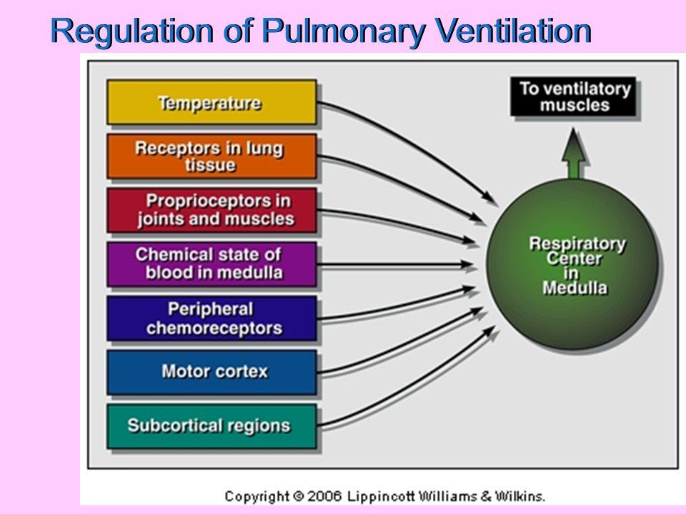 Regulation of Pulmonary Ventilation