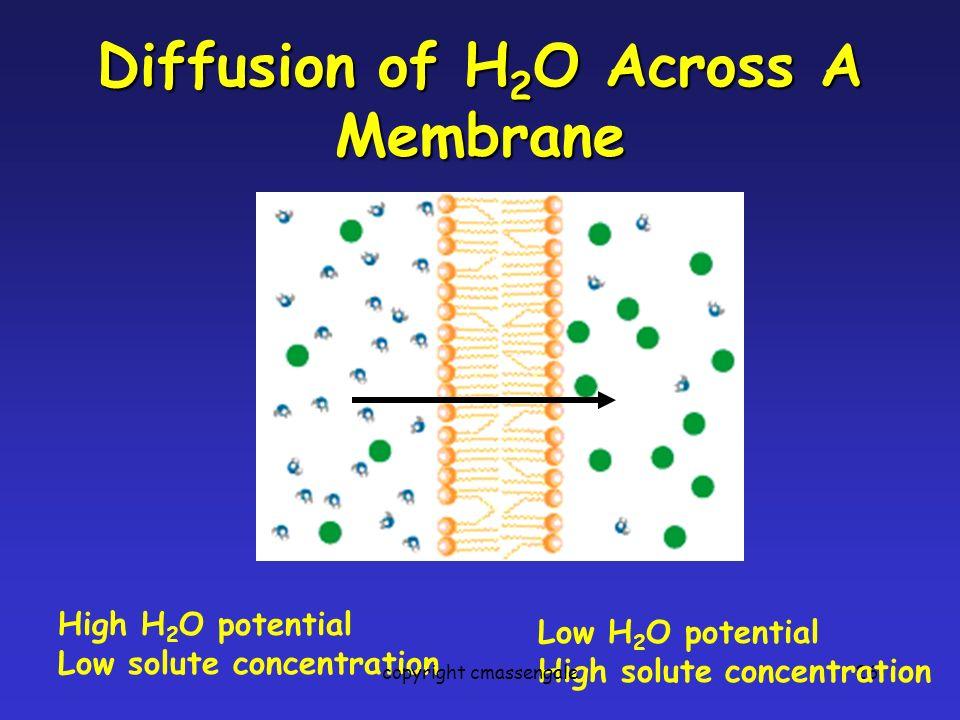 Diffusion of H2O Across A Membrane
