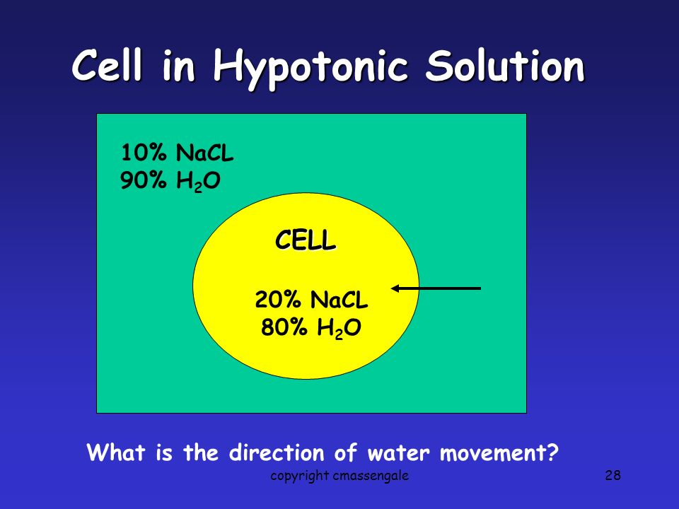 Cell in Hypotonic Solution