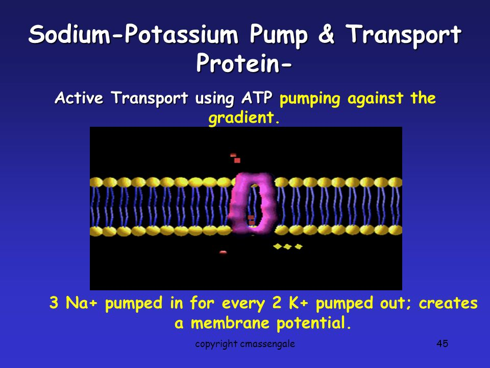 Sodium-Potassium Pump & Transport Protein-