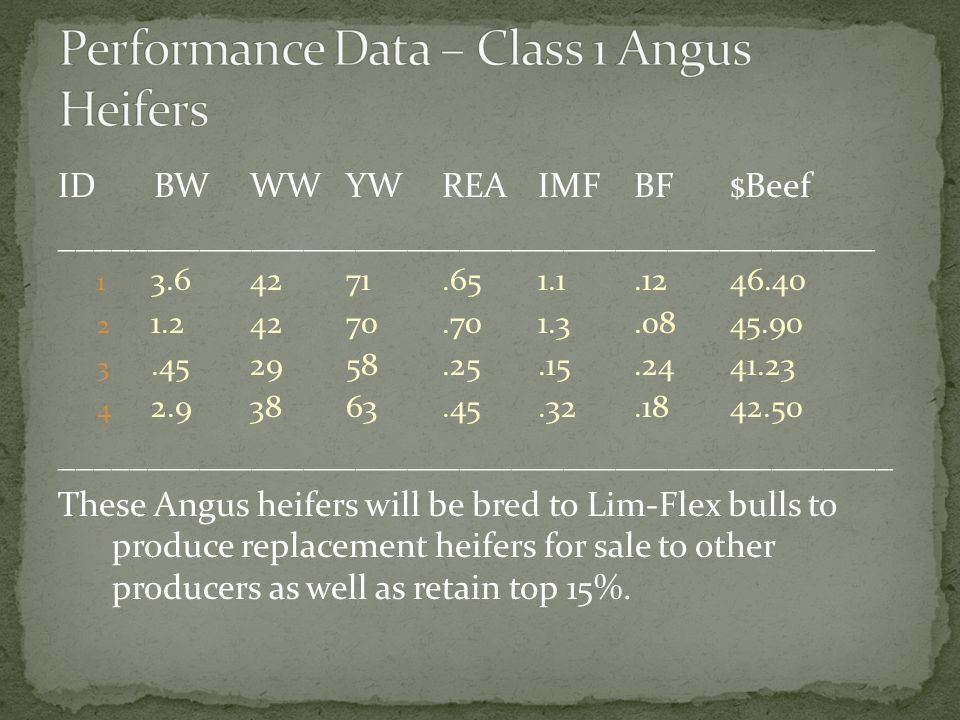 Performance Data – Class 1 Angus Heifers