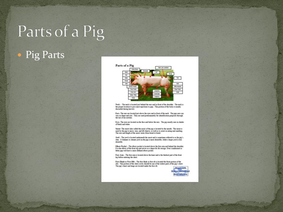 Parts of a Pig Pig Parts