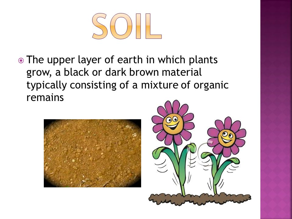 SOIL The upper layer of earth in which plants grow, a black or dark brown material typically consisting of a mixture of organic remains.