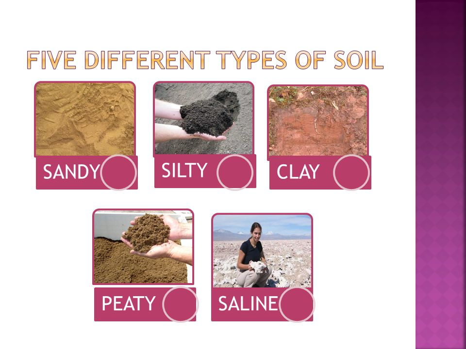 FIVE DIFFERENT TYPES OF SOIL