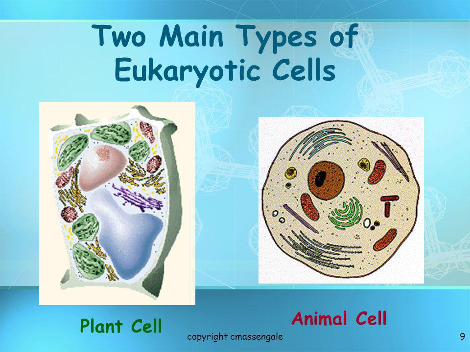 Two Main Types of Eukaryotic Cells