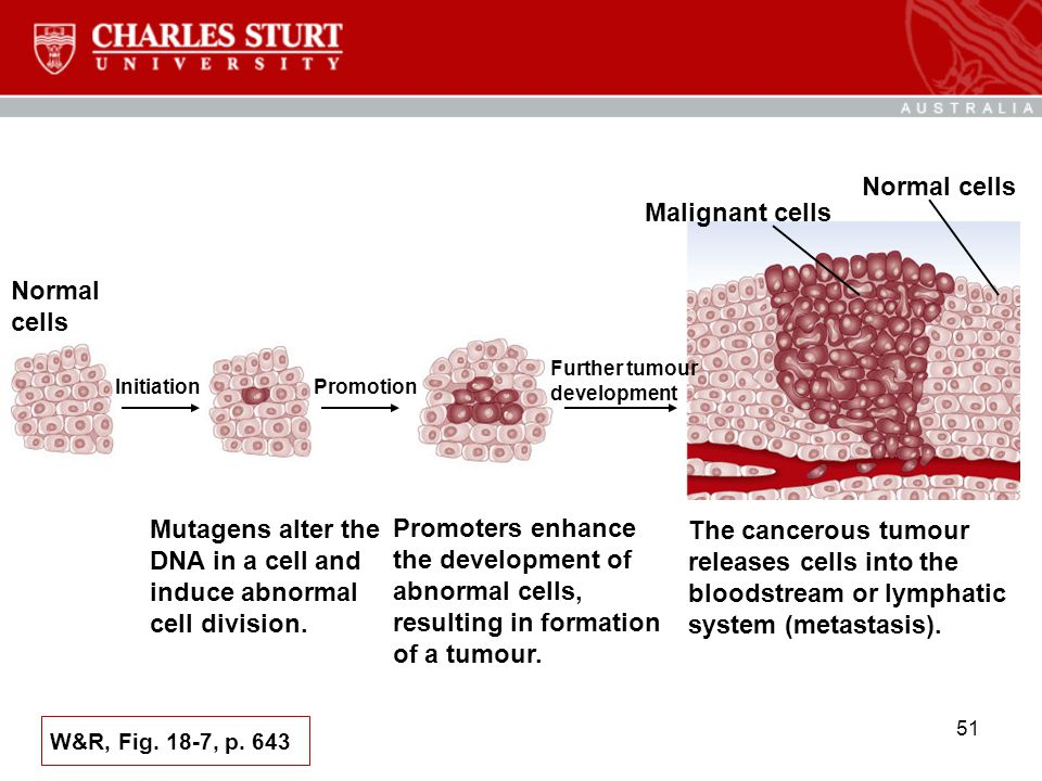 Mutagens alter the DNA in a cell and induce abnormal cell division.