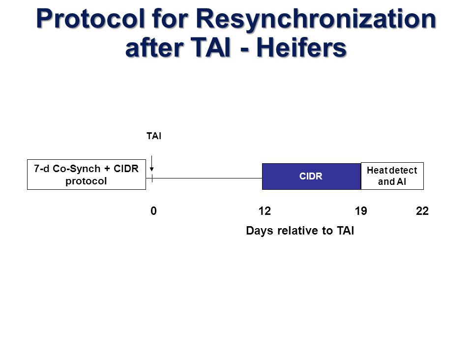 Protocol for Resynchronization after TAI - Heifers