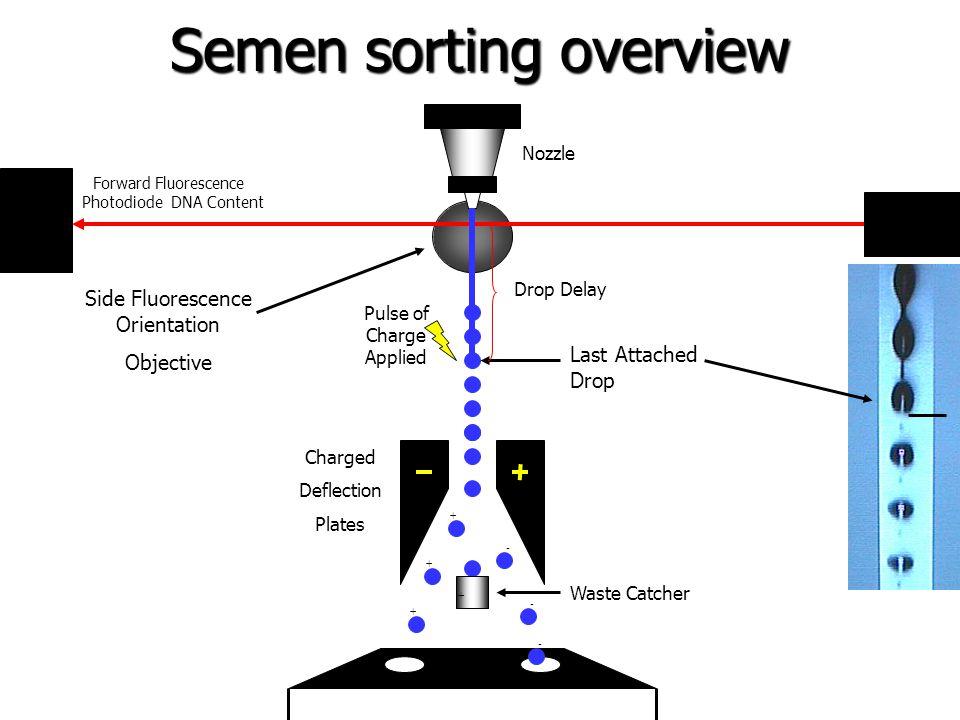 Semen sorting overview