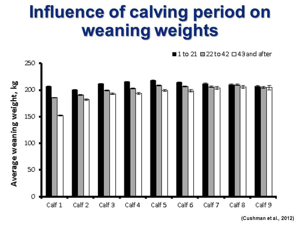 Influence of calving period on weaning weights