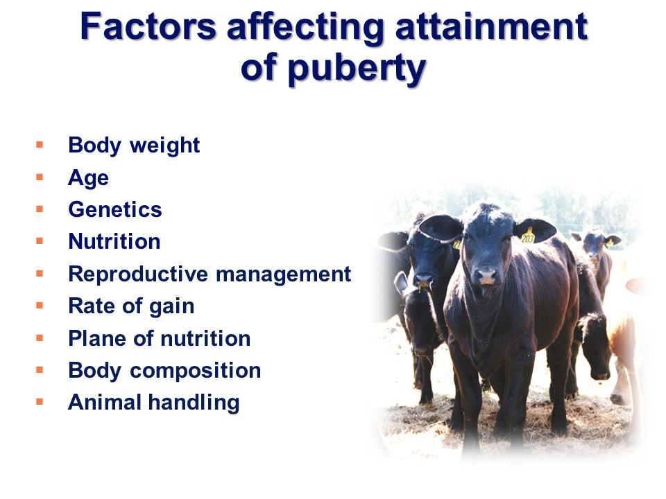 Factors affecting attainment of puberty