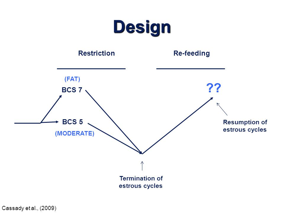 Resumption of estrous cycles Termination of estrous cycles