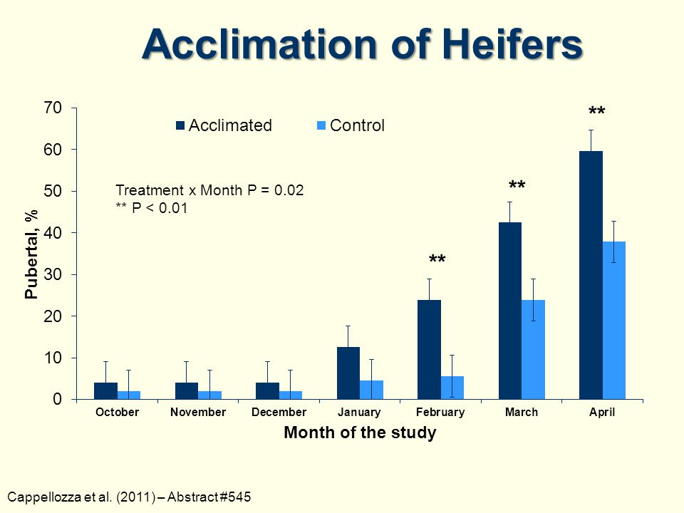 Acclimation of Heifers