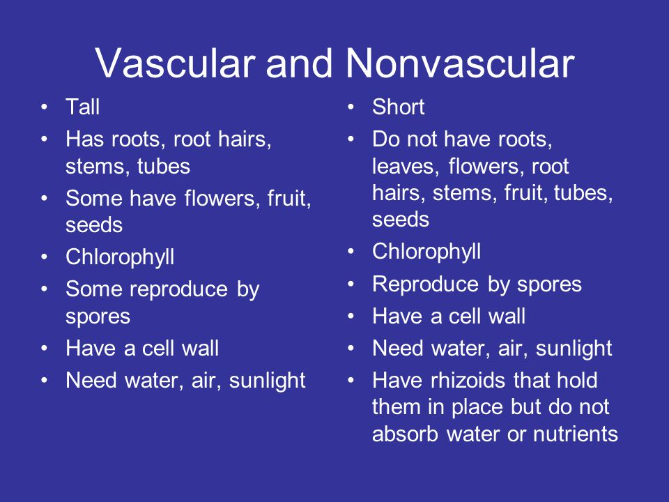 Vascular and Nonvascular