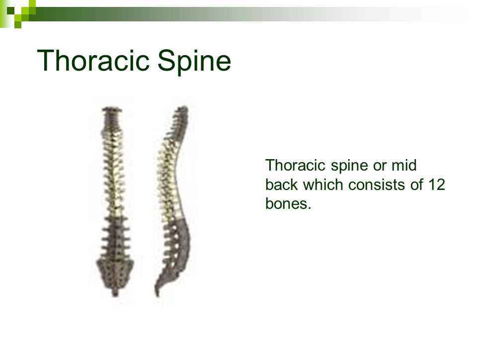 Thoracic Spine Thoracic spine or mid back which consists of 12 bones.