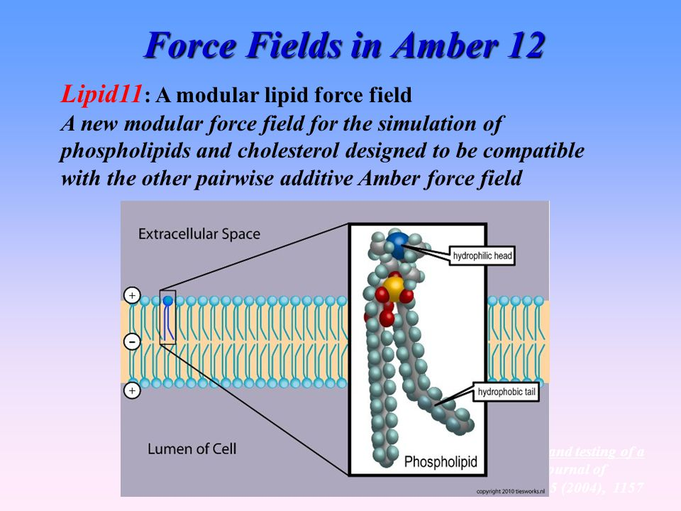 Force Fields in Amber 12 Lipid11: A modular lipid force field