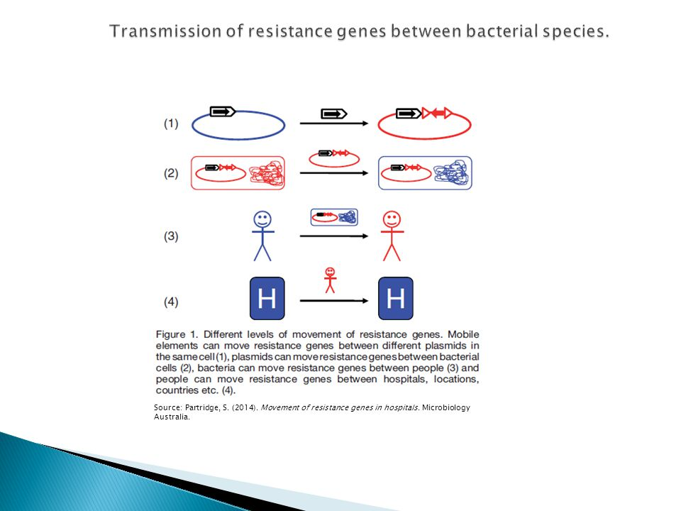 Transmission of resistance genes between bacterial species.